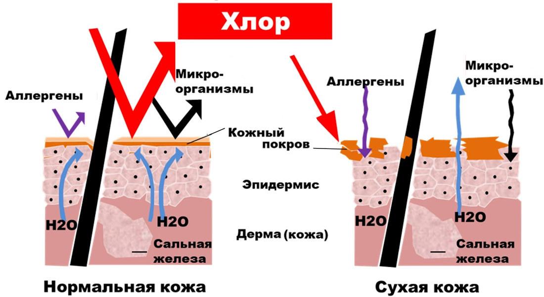 Влияние хлора - схема